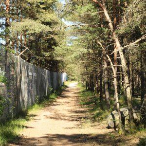 Waldweg in der Bildmitte, rechts dichter Nadelwald, links ein Grenzzaun mit Stacheldraht, der teilweise verwuchert ist.
