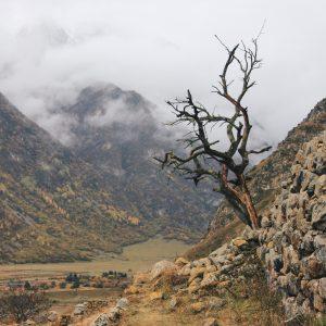 Treffpunkt Kaukasus Projektbild